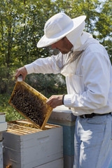 Inspecting bee hive