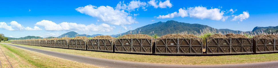 Panorama of a sugar cane train fully loaded with harvest.