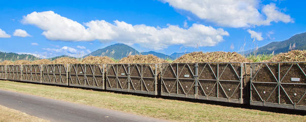 Cane train loaded with sugar cane