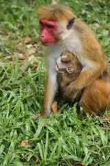 Affenmutter mit Jungtier