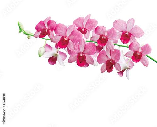 canvas print picture Orchids on white background with clipping path