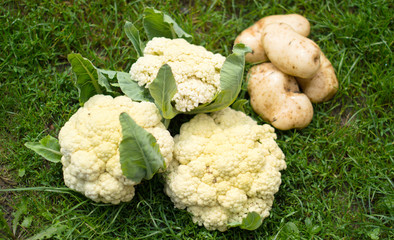 Still life - a cauliflower and potato