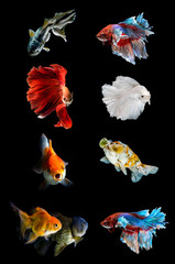Collection of v fish on black background