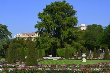 El ahuehuete del parterre del parque del Retiro. Madrid