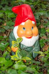 Garden gnome standing in ivy