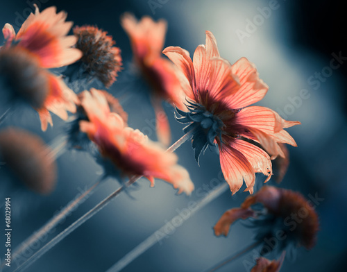 colorful flowers at abstract background - 68029914