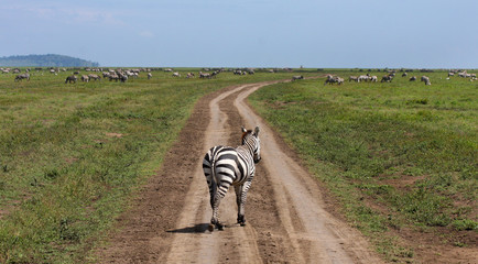 Serengeti grande migrazione