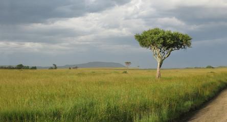 Tanzania parco nazionale