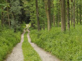 Idyllische Waldwanderung