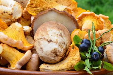 Mushrooms and blueberries