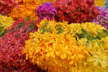 Flores, mercado de flores de Bangkok, Tailandia
