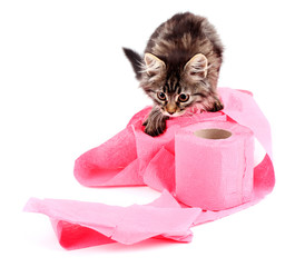 Cute kitten playing with roll of toilet paper, isolated on
