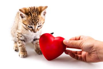 Loving a kitten