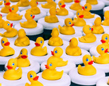 Rubber Duck Game