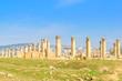 Landscape grass prospects the columns of Gerasa, Jordan