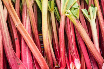 Fresh red rhubarb at the market