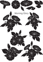 Patterns Morning Glory with black