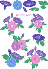 Patterns Morning Glory set