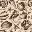 Seashell seamless pattern. Hand drawn sketch illustration - 68049920