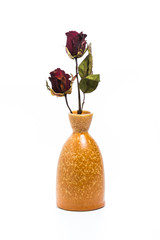 Isolated Withered roses in vase