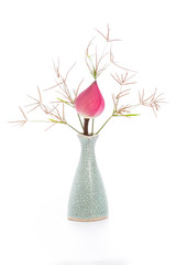 Isolated Lotus flower in vase