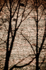 Branches shadows on the brick wall