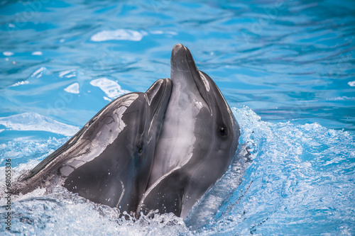 Foto op Aluminium Dolfijn dolphin