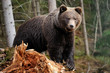 Big bear in forest