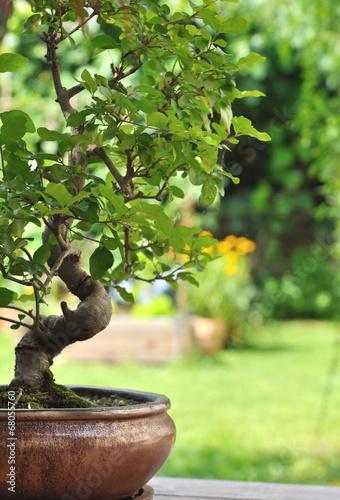 Poster Bonsai bonsaï en pot dans jardin