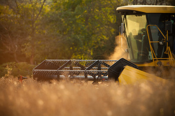 Detail of combiner harvesting wheat