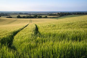 Beautiful landscape wheat field in bright Summer sunlight evenin