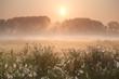 sunbeams over misty meadow