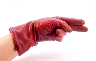 The Hand  in Glove Showing Direction