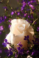Beautiful Rose surrounding with Purple Wildflowers