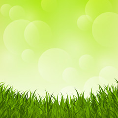 Fresh grass on green background