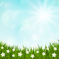 Green grass on sunny background