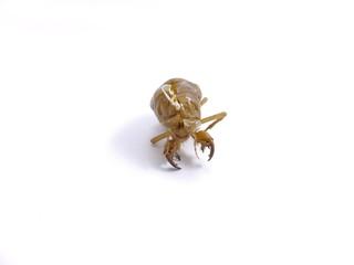 昆虫の脱け殻