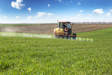 Farmer spraying wheat field with tractor sprayer