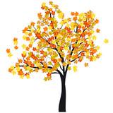 Fototapety Autumn maple tree