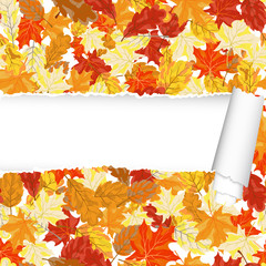 Autumn maple seamless pattern with ripped stripe