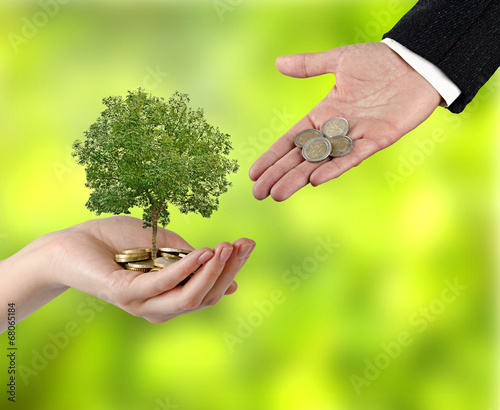 canvas print picture tree growng from pile of coins