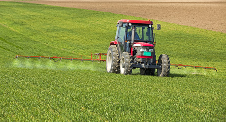 Farmer spraying wheat field at spring season