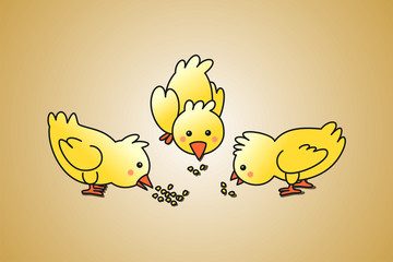 Pollitos comiendo maiz
