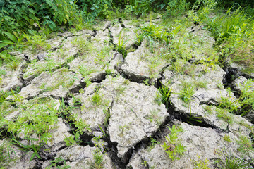 Large cracks in parched earth