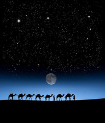 camels in the morning on stars sky background.