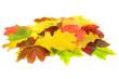 Herbst 61
