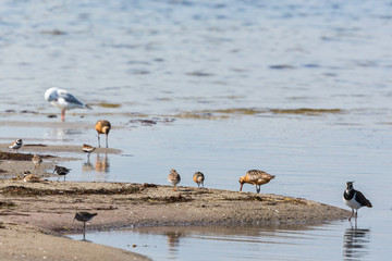 Shorebirds at the beach