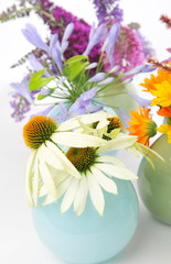 Echinacea, Calendula and other herbal flowers