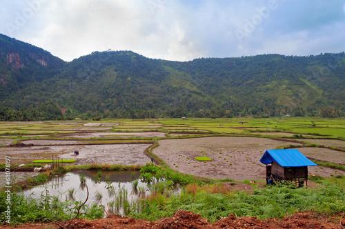 Foto op Plexiglas Indonesië Harau Valley