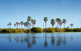 palm trees reflecting in the lake manze in africa